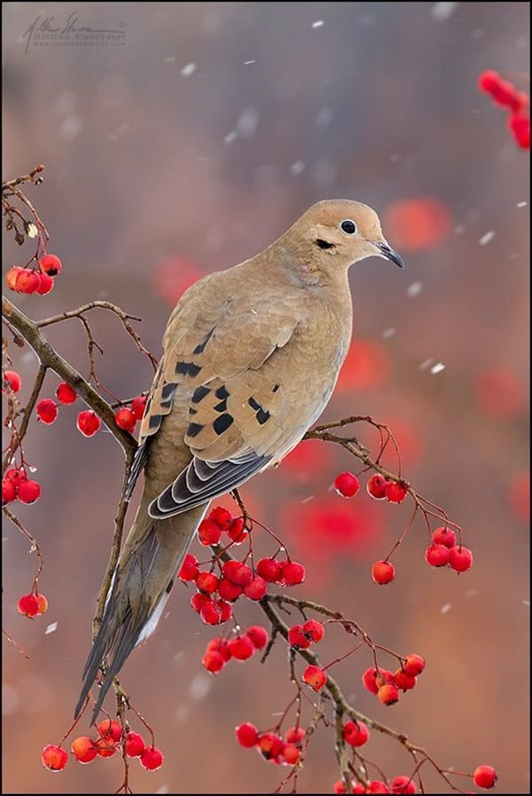 Beautiful Bird Pictures  (20)