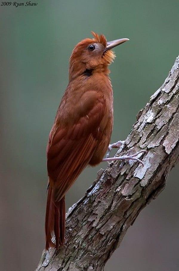 Beautiful Bird Pictures  (22)