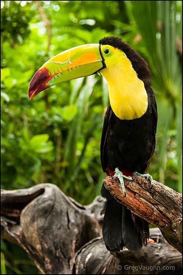 Beautiful Bird Pictures  (25)