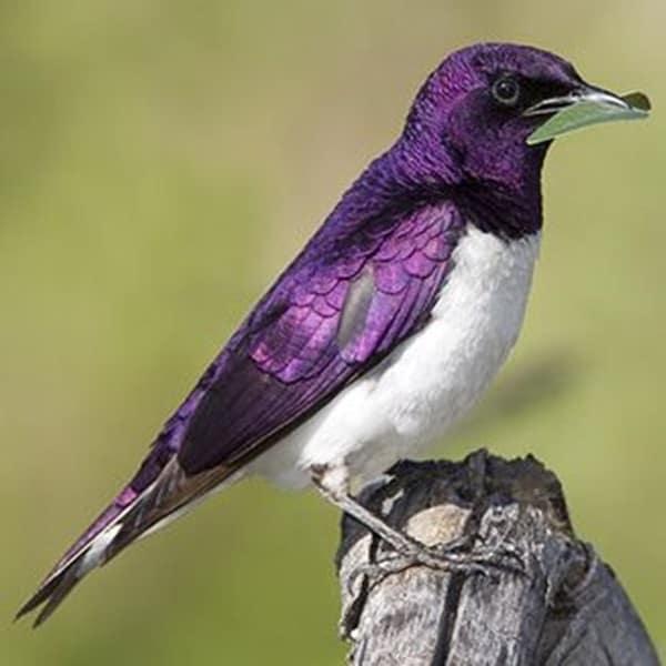 Beautiful Bird Pictures  (26)