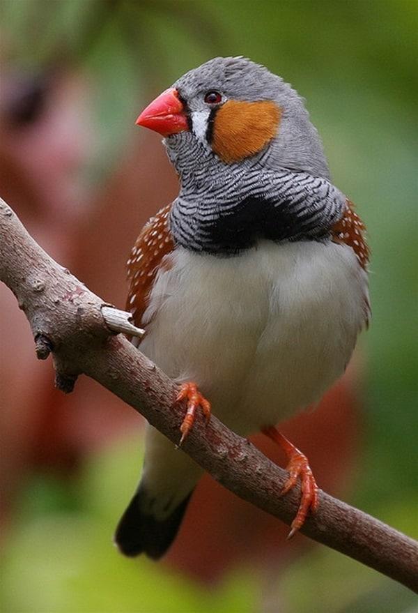 Beautiful Bird Pictures  (28)