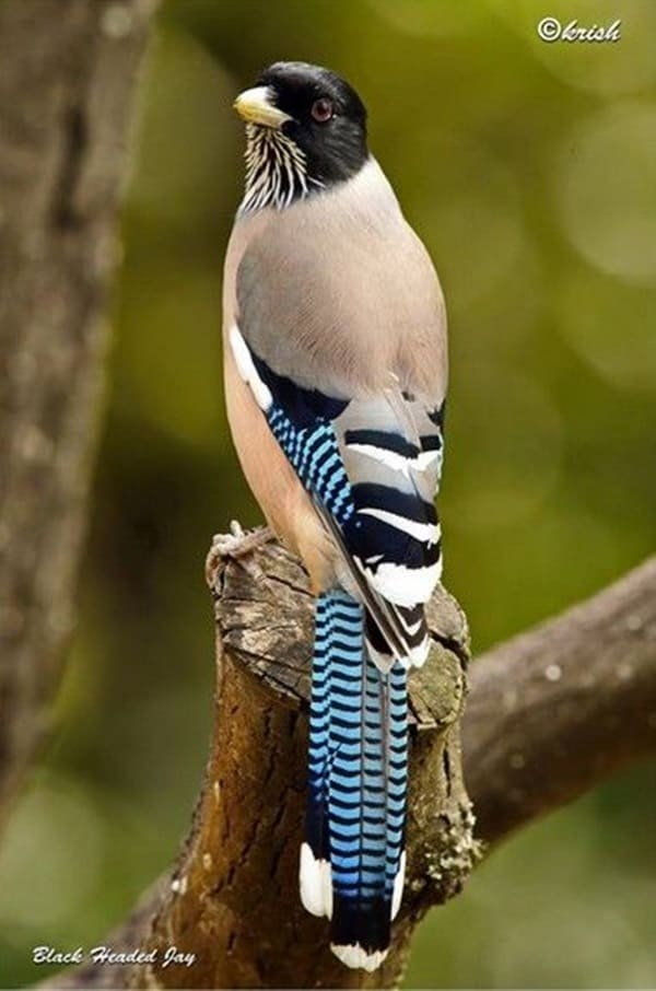 Beautiful Bird Pictures  (3)