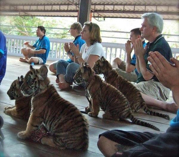 Cute Praying Animal Pictures (11)