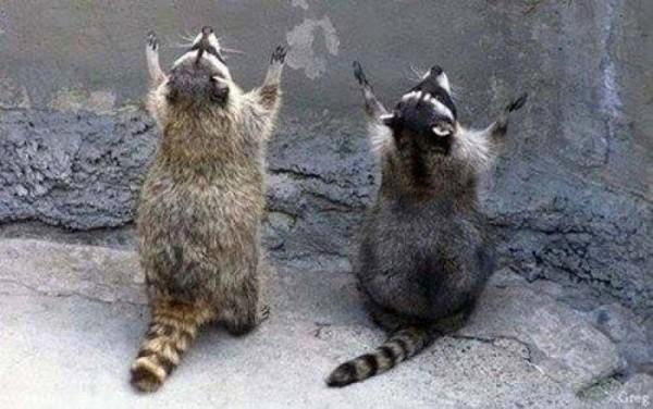 Cute Praying Animal Pictures (14)