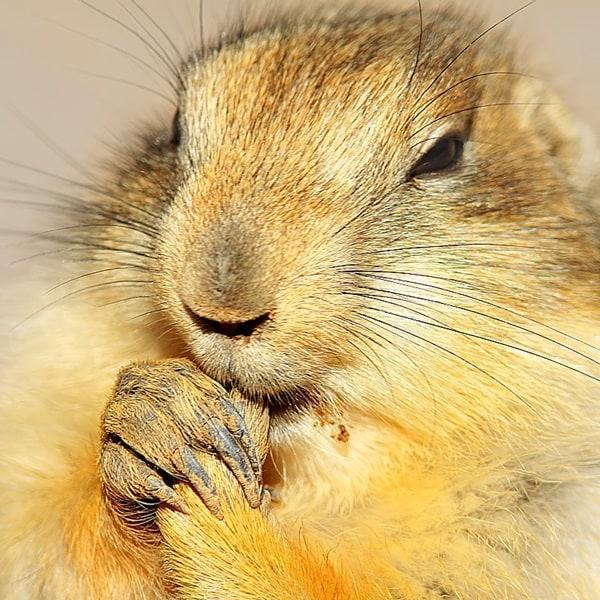 Cute Praying Animal Pictures (15)