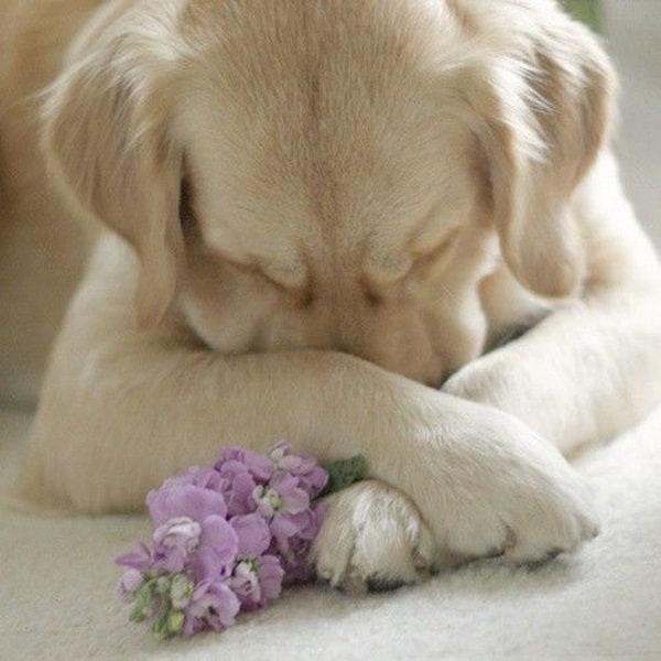 Cute Praying Animal Pictures (16)