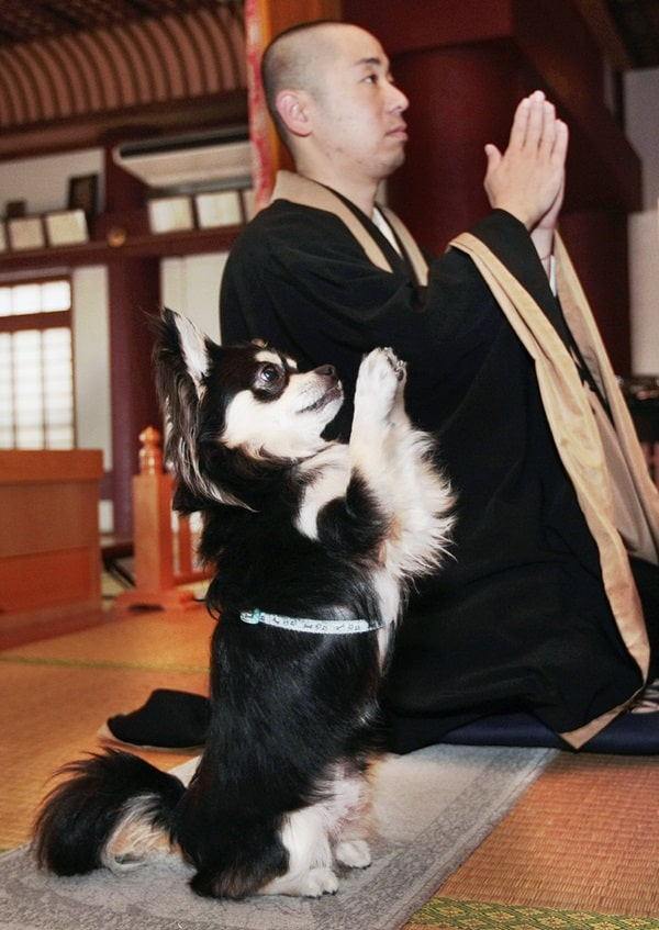 Japan Praying Dog