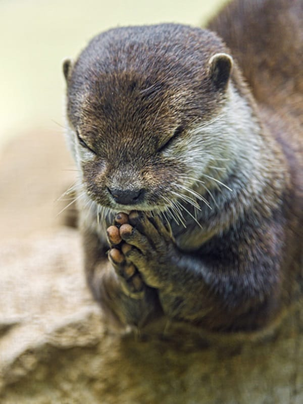 Cute Praying Animal Pictures (3)