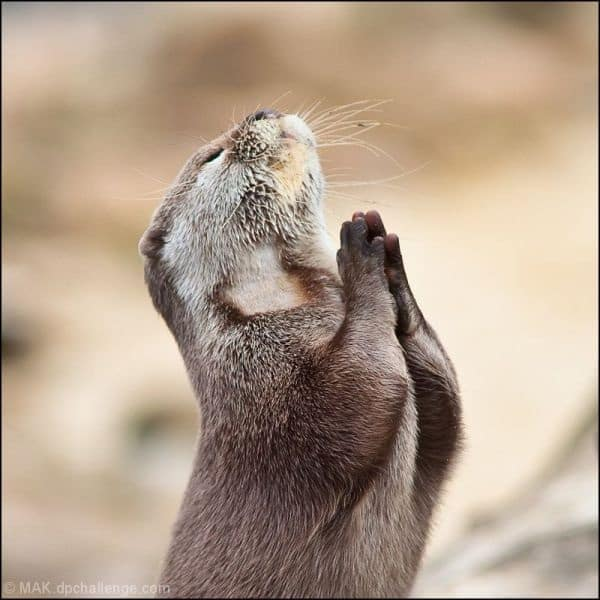 Cute Praying Animal Pictures (4)