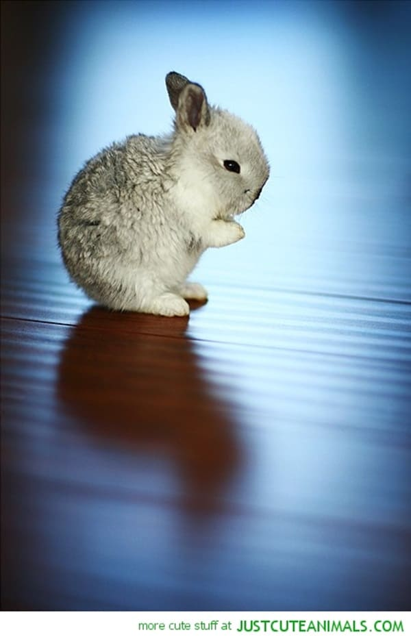 Cute Praying Animal Pictures (5)