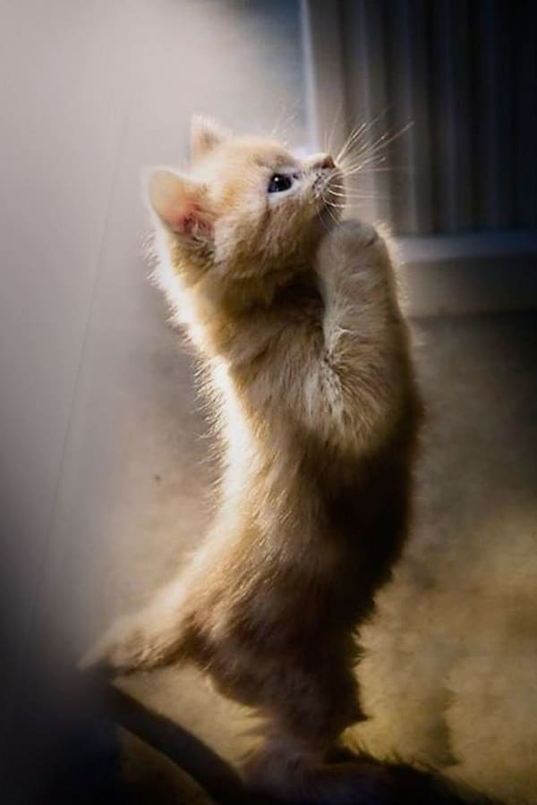 Cute Praying Animal Pictures (9)