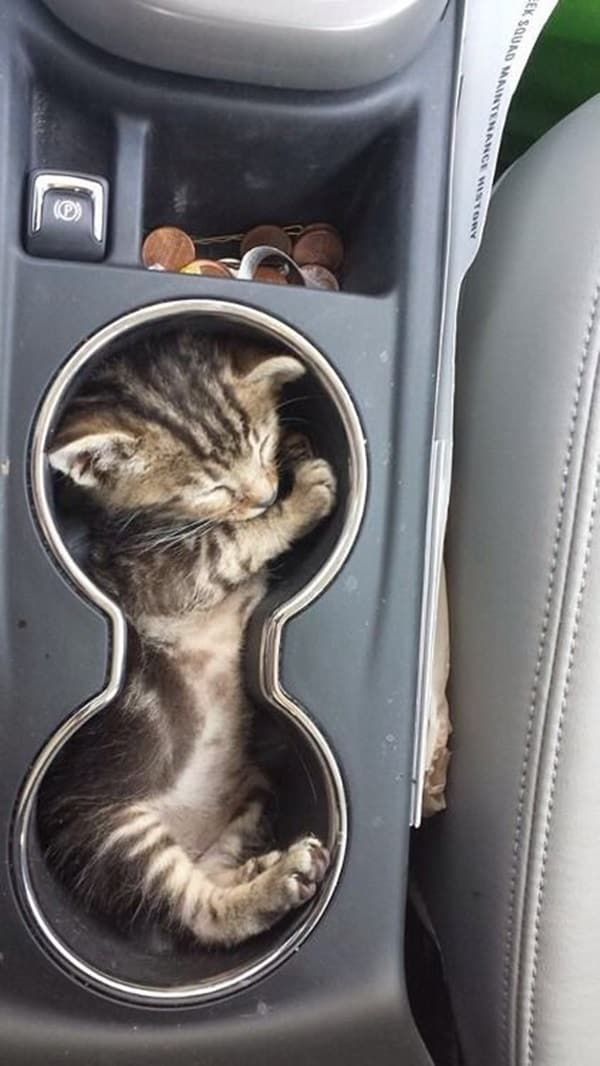 Funny Pictures Of Cats Can Fit Anywhere (10)
