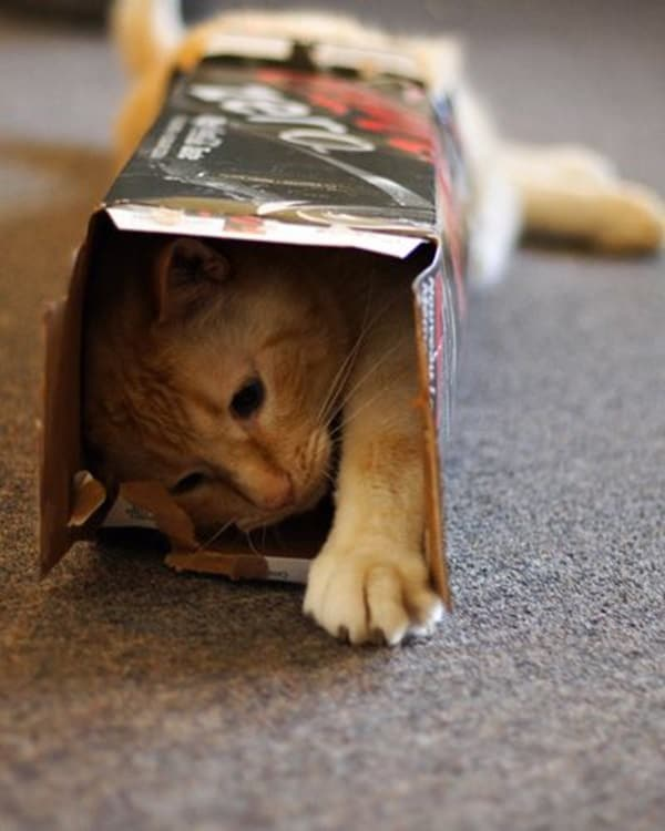 Funny Pictures Of Cats Can Fit Anywhere (11)