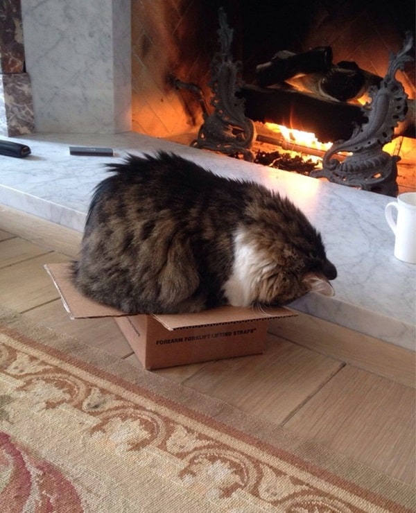 Funny Pictures Of Cats Can Fit Anywhere (12)