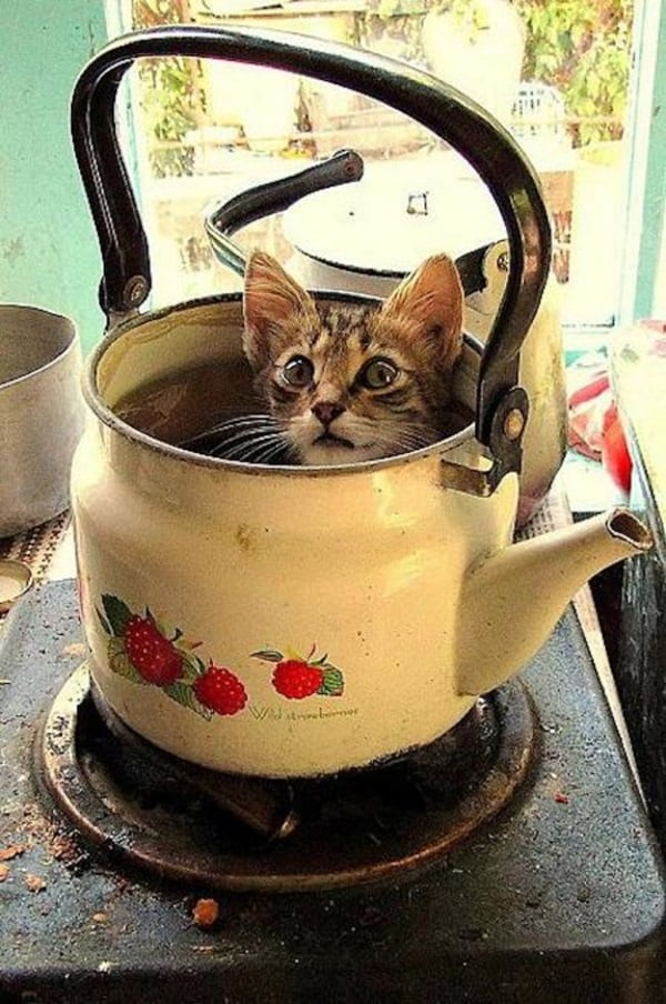 Funny Pictures Of Cats Can Fit Anywhere (15)