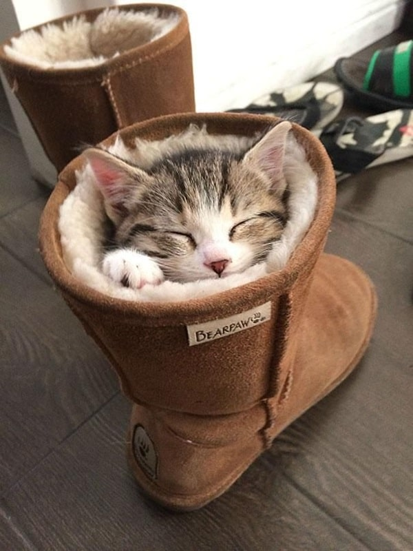 Funny Pictures Of Cats Can Fit Anywhere (20)