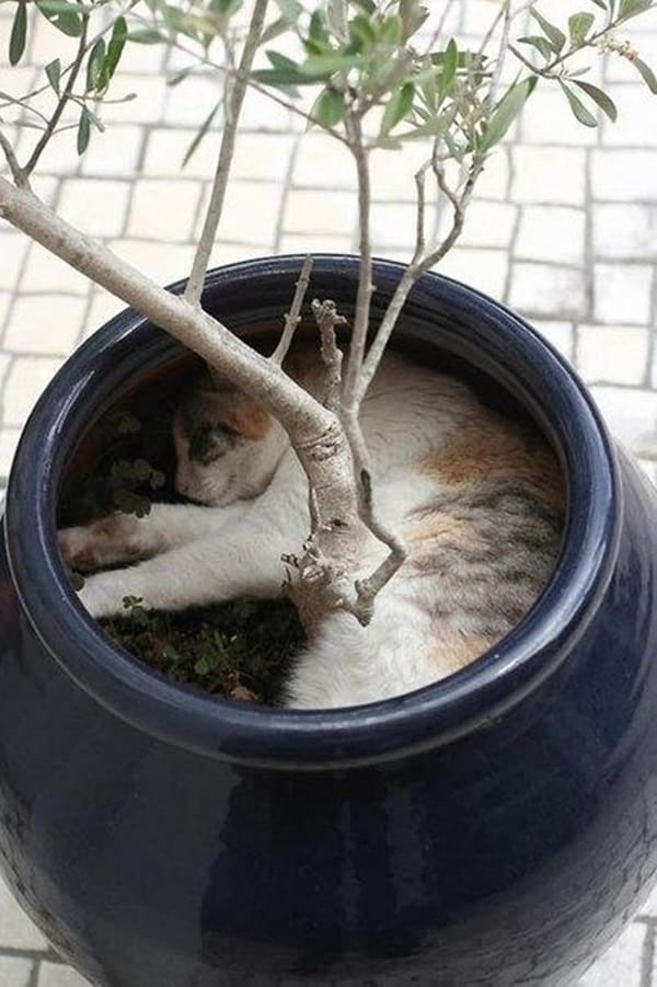 Funny Pictures Of Cats Can Fit Anywhere (24)