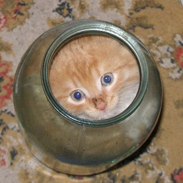 Funny Pictures Of Cats Can Fit Anywhere (26)