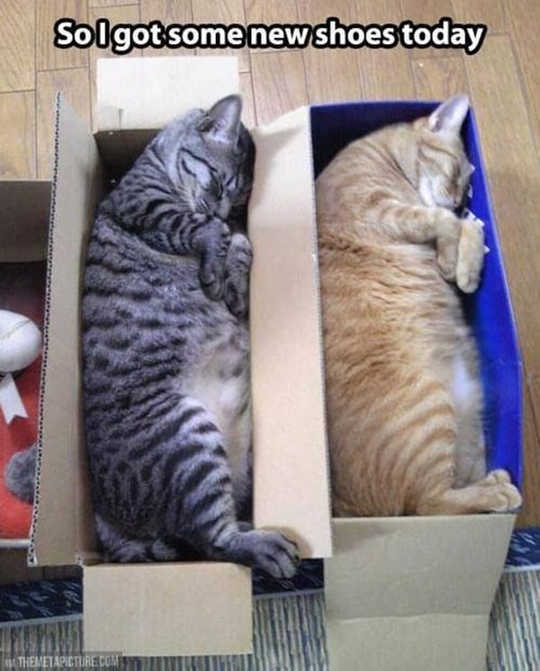 Funny Pictures Of Cats Can Fit Anywhere (4)