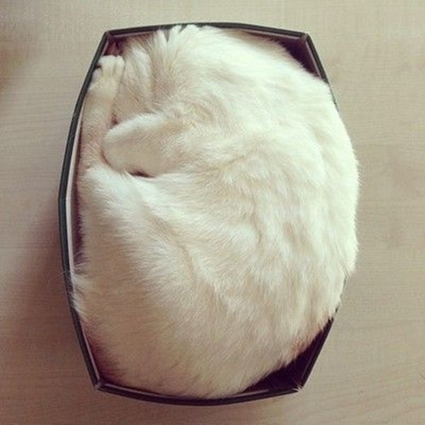 Funny Pictures Of Cats Can Fit Anywhere (5)