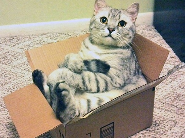 Funny Pictures Of Cats Can Fit Anywhere (8)