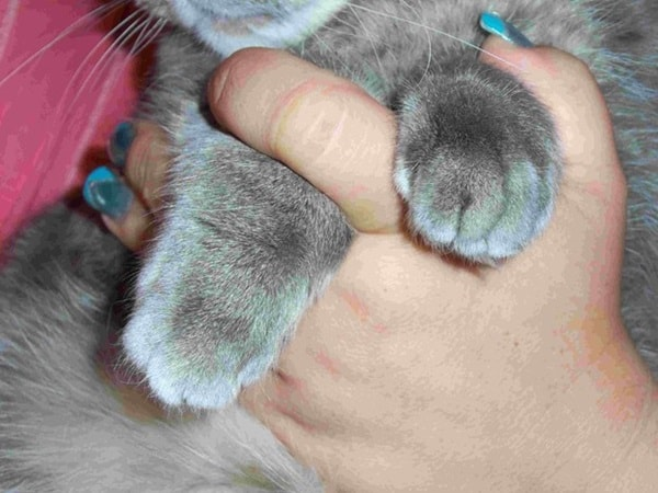 How to Trim your Cat's Nail2