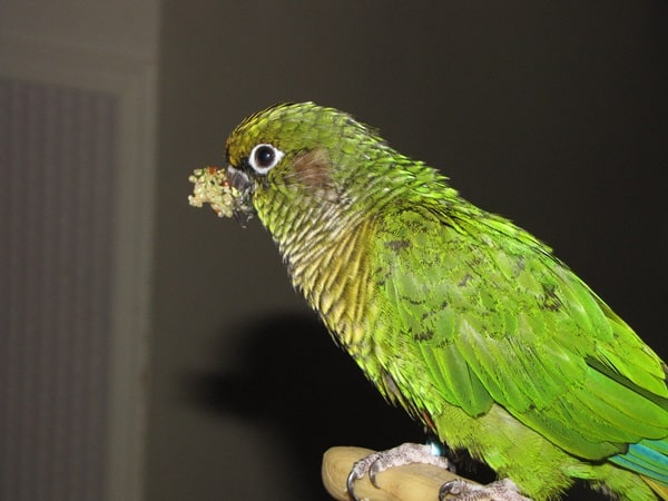 List of Toxic and Non-Toxic Plants for Parrots1