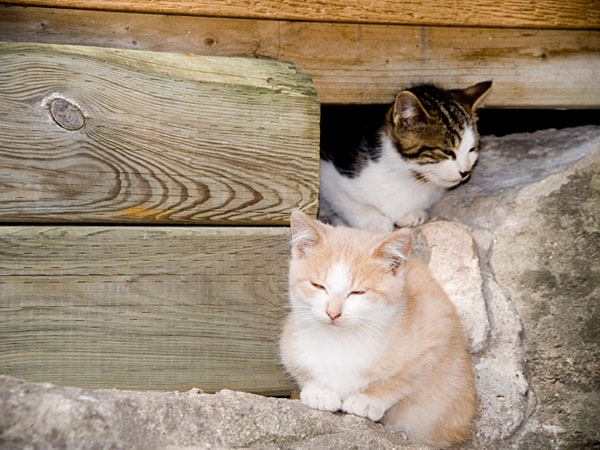 Myths about your Community Cats4