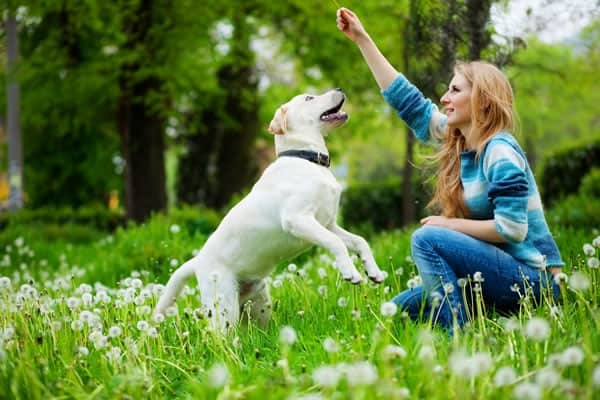 Understand how your Dog Thinks1