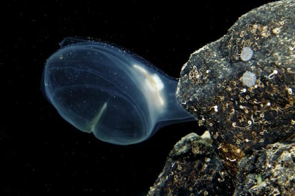 deep sea creatures you have never heard of2