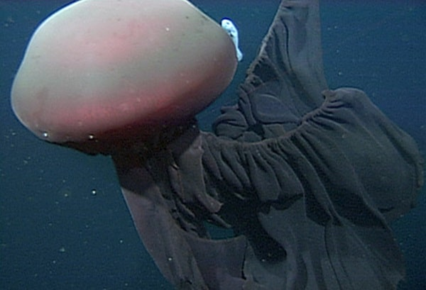 deep sea creatures you have never heard of3