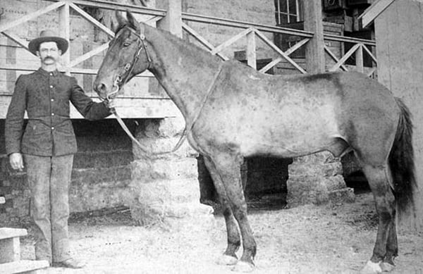 famous horses in history2