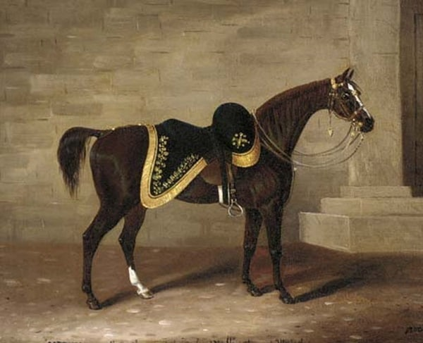 famous horses in history5