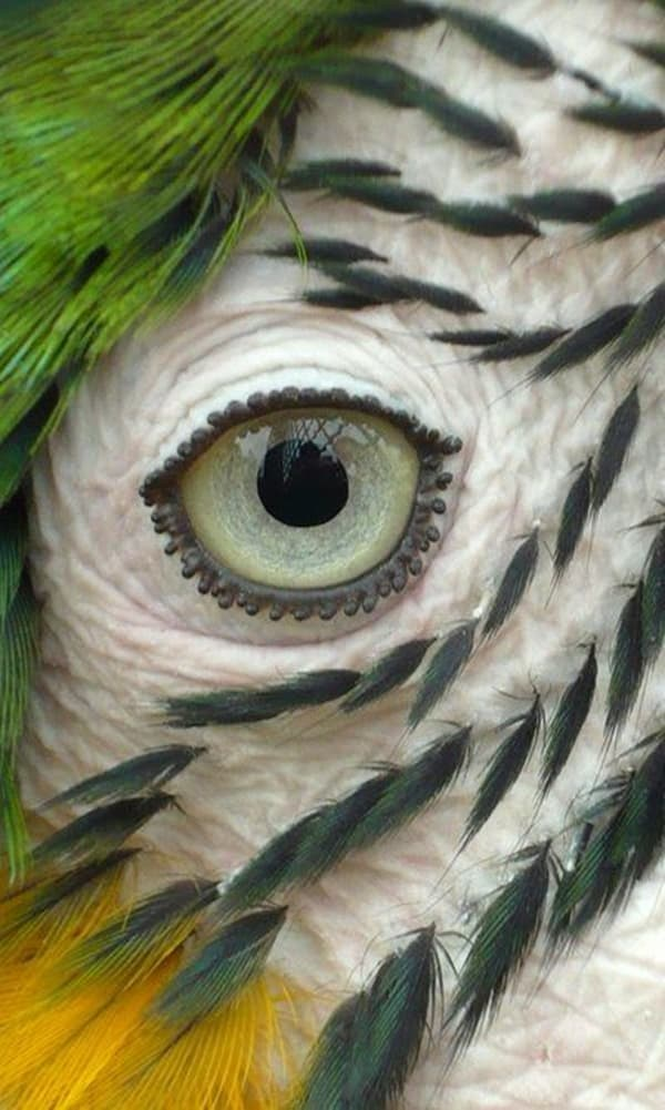 Animals macro photography (22)