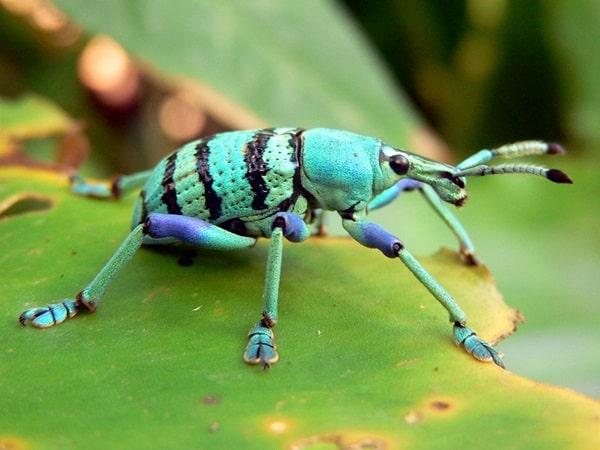 Animals macro photography (25)