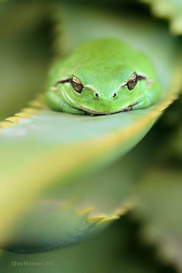 Animals macro photography (26)