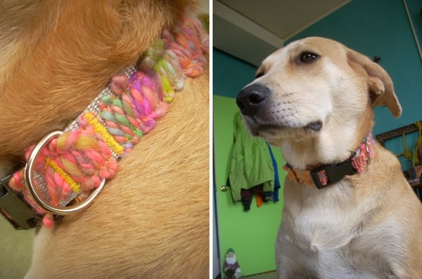 10 Fetching DY dog Collars10