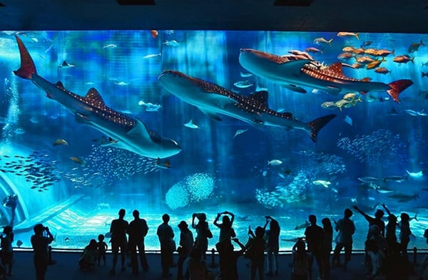 10 Largest aquariums in the world10