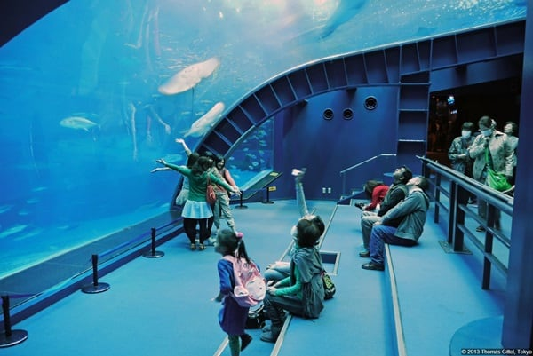 10 Largest aquariums in the world3