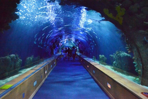 10 Largest aquariums in the world4