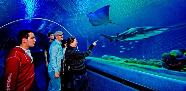 10 Largest aquariums in the world5