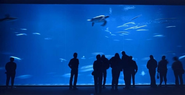 10 Largest aquariums in the world6