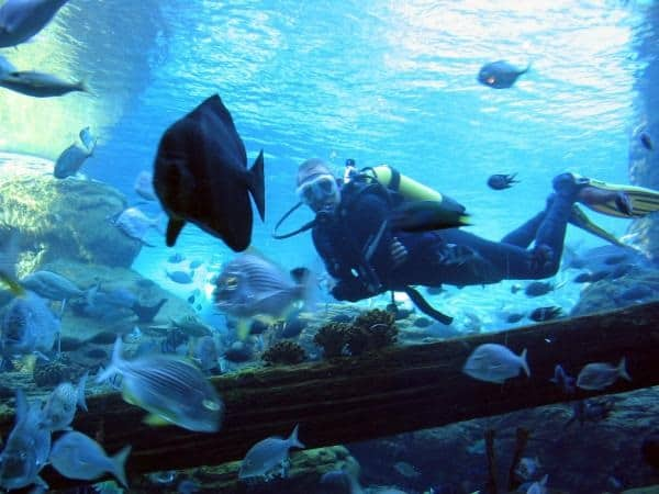 10 Largest aquariums in the world7