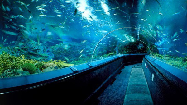 10 Largest aquariums in the world8