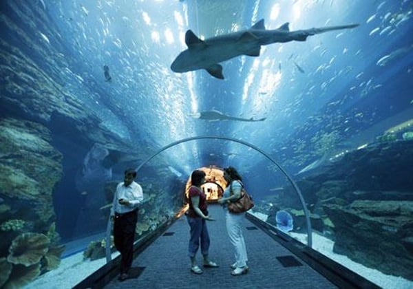10 Largest aquariums in the world9