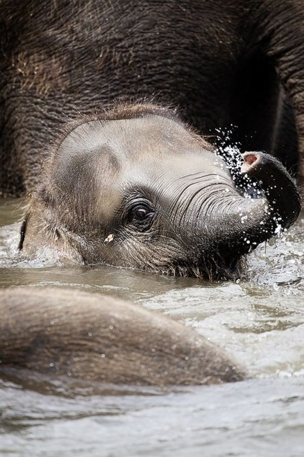 Beautiful Baby Elephant Pictures (10)