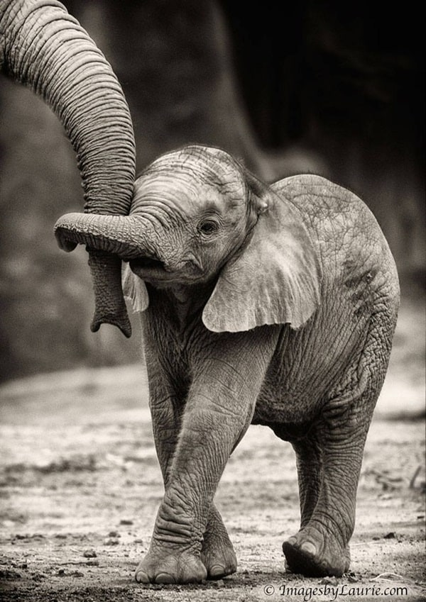Beautiful Baby Elephant Pictures (11)