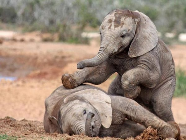35 Beautiful Pictures Of Baby Elephant
