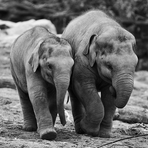 Beautiful Baby Elephant Pictures (16)