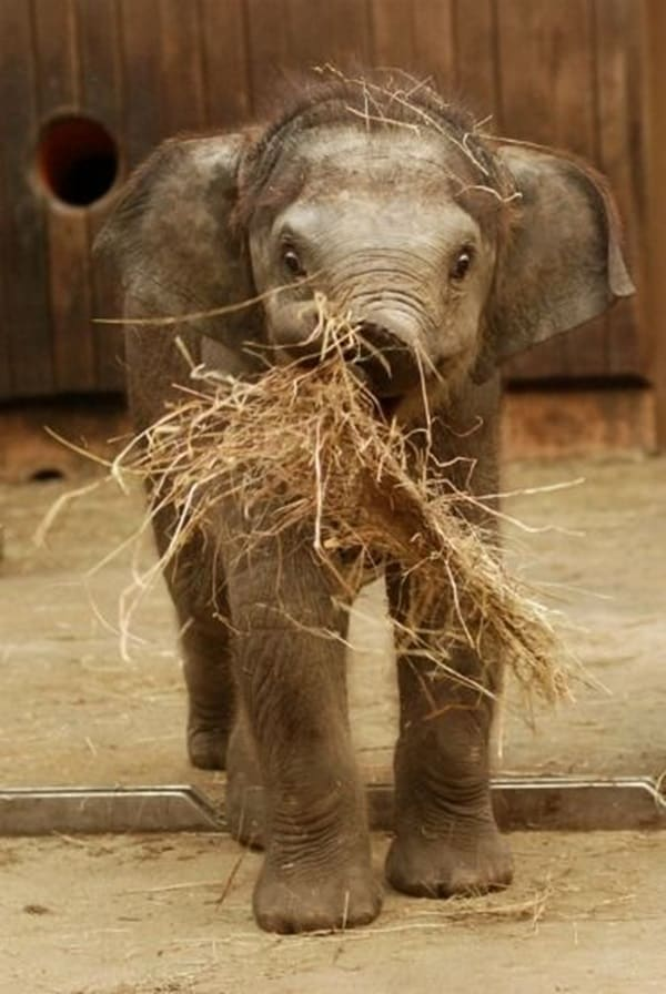 Beautiful Baby Elephant Pictures (17)